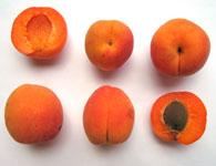abricotier abricot. Black Bedroom Furniture Sets. Home Design Ideas