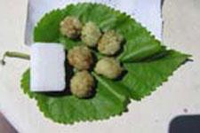 fruits mûrier platane